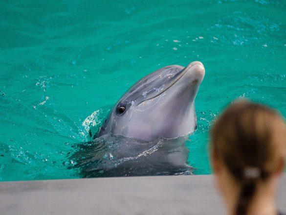 Slide 2 Experiencia Nado con delfines-min