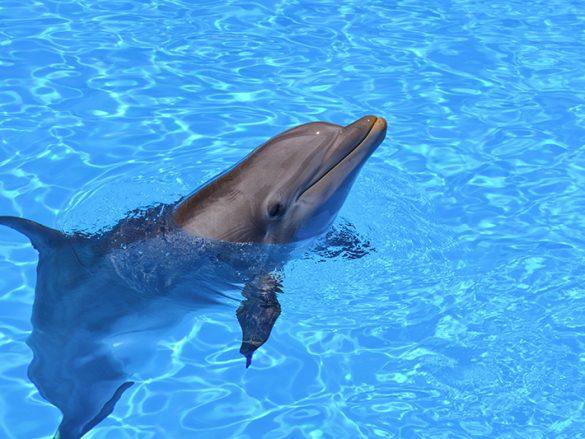 Slide 3 Slide 1 Experiencia Nado con delfines-min